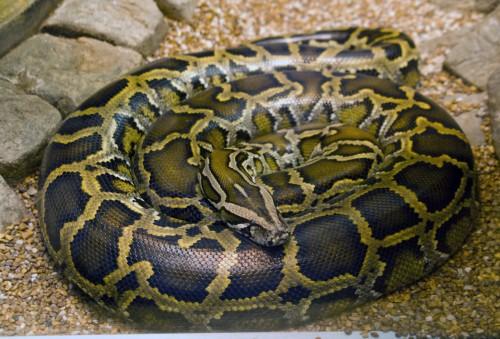Ordinary python