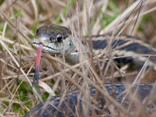Ordinary snakes (Photo: Ingrid Taylar / CC BY 2.0)