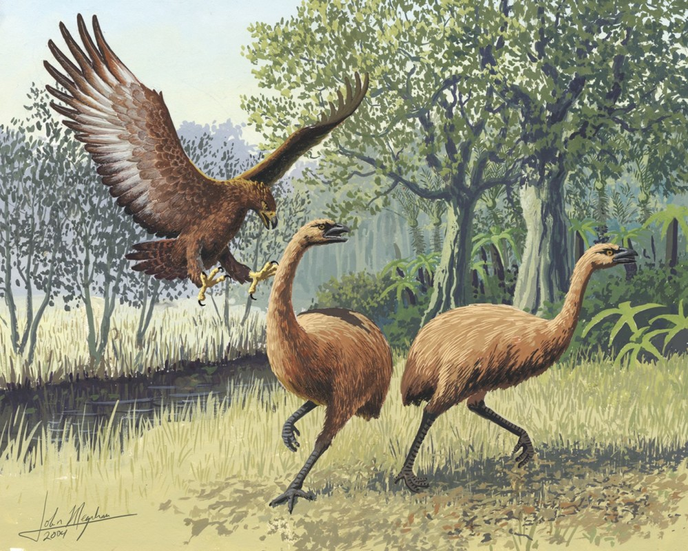 Haast's eagle attacking moa