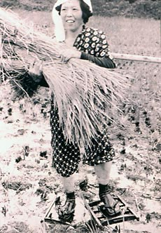 Working woman wearing tageta
