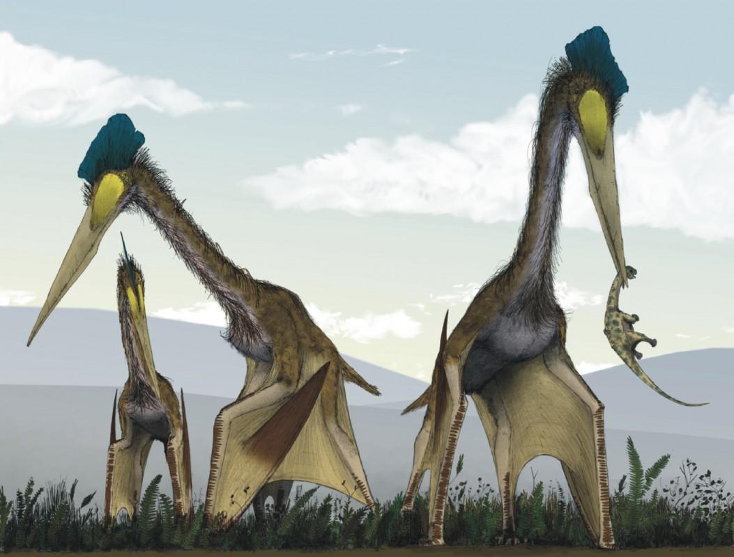 Quetzalcoatlus northropi