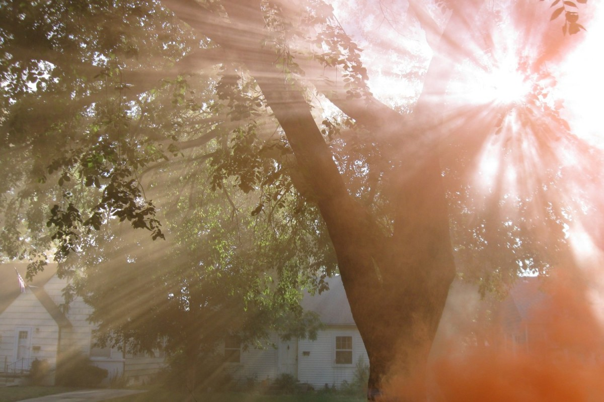 Sun beams through the tree branches