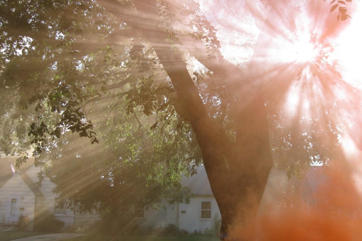 Sun beams through the tree branches
